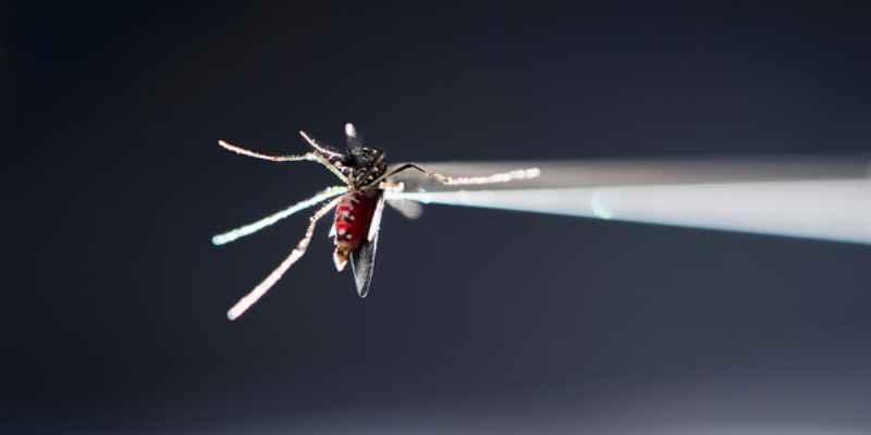Vigilan en Acapulco desarrollo del zika en embarazadas