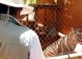 Ordenan mejorar instalaciones a 58 zoológicos de México 10