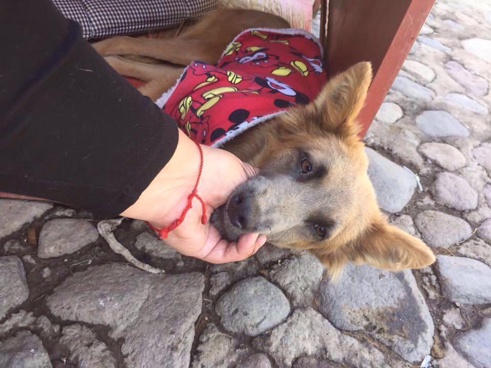 perro-rescatado (1)