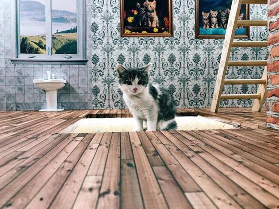 Kattarshians-gatito-gato