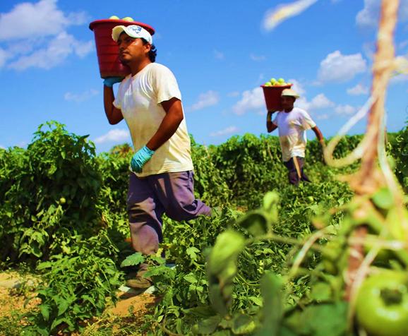 agricultura mexico 2
