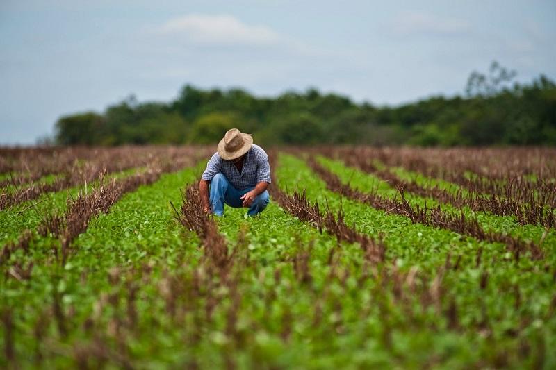 agricultura mexico