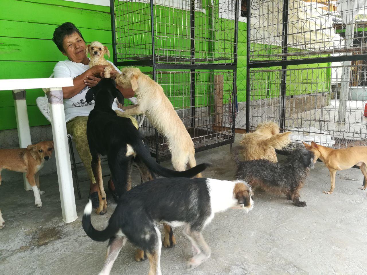 rescate-de-perros-9