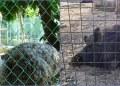 Zoológico de Ciudad del Carmen exhibía 352 animales desnutridos 11