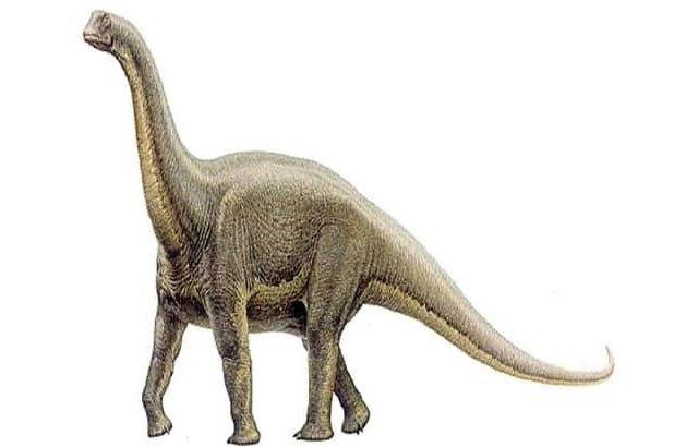 ¿Qué especies de dinosaurios habitaron en México? 12