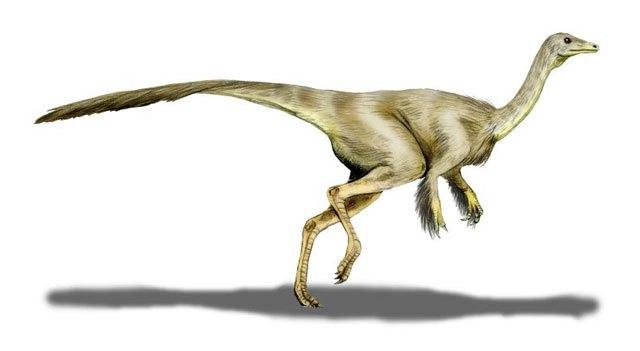 ¿Qué especies de dinosaurios habitaron en México? 11