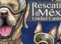 Crean estampilla de perros rescatistas en honor a su labor 17