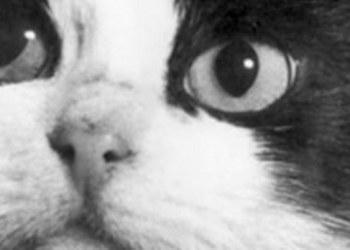 Félicette primer felino que visitó el espacio hace 55 años 1