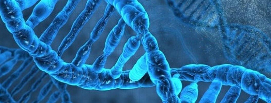 Identifican genes vinculados al riesgo de enfermedad renal crónica