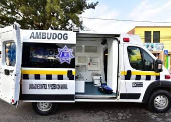 'Ambudog' la primera ambulancia canina en México 1