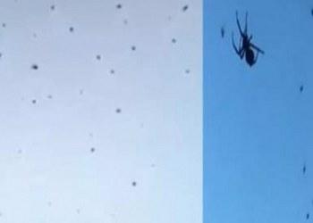 "Este extraño fenomeno de ""lluvia de arañas"" ocurre en Brasil 1"