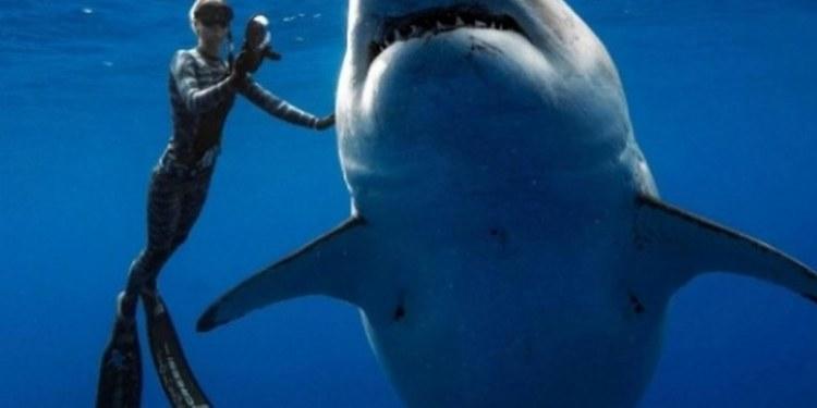 Buzos logran nadar y tomar foto a tiburón más gran del mundo; mide 6 metros 1