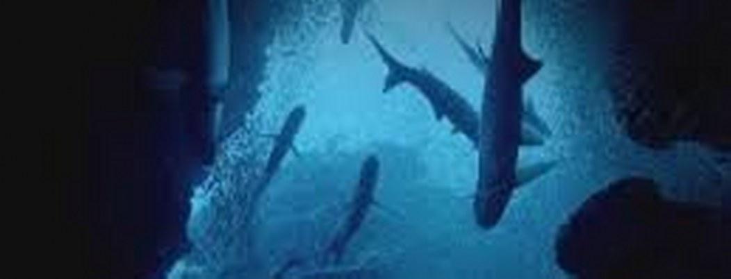 Vida subacuática, motivo de celebración mundial el próximo 3 de marzo