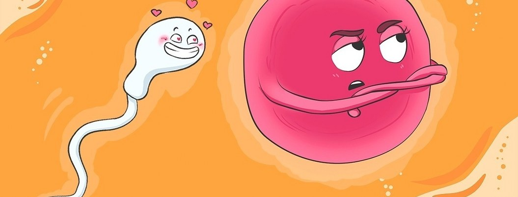 Óvulo encargado de elegir al espermatozoide y no al revés
