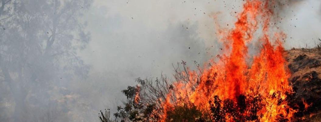 Capacitar brigadas evitaría incendios: Colegio de Biólogos de Guerrero