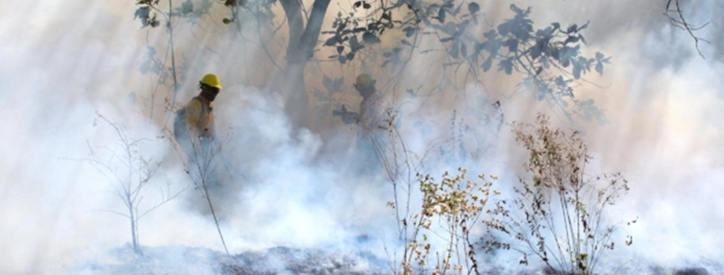Incendios forestales afectan áreas naturales protegidas de México