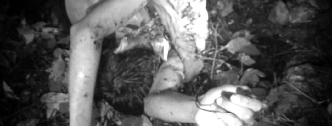 Degollan a un niño indígena en comunidad de Ometepec, Guerrero
