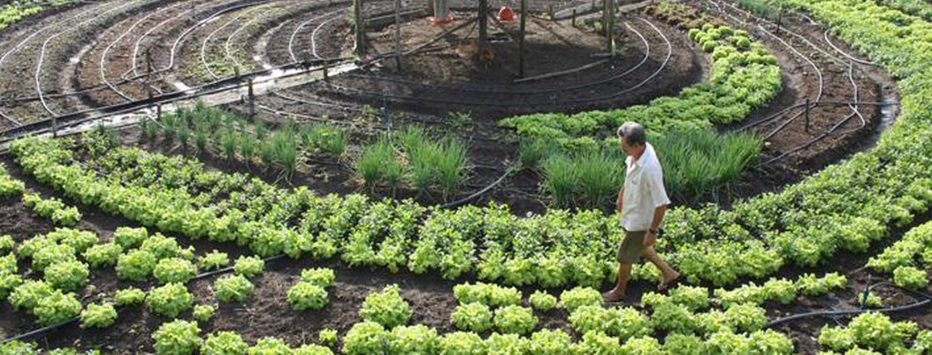 Dinamarca busca ser el primer país 100% orgánico para 2020