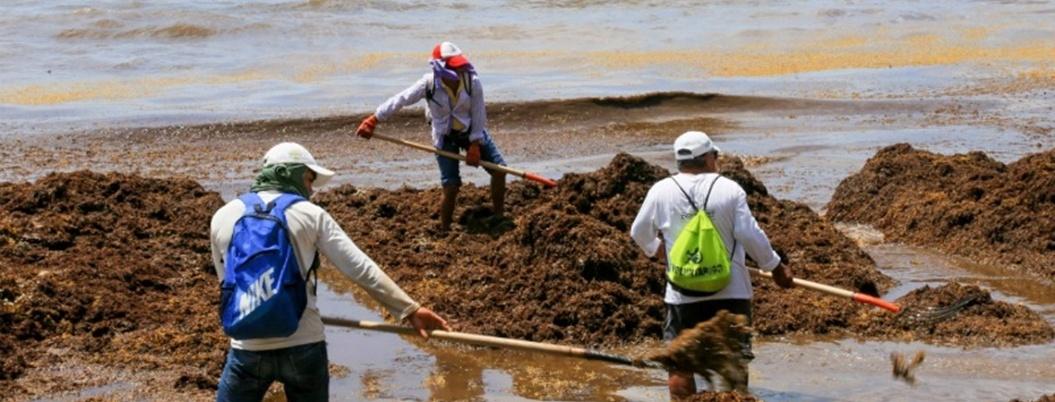 AMLO vuelve a minimizar el sargazo; llama a visitar Quintana Roo