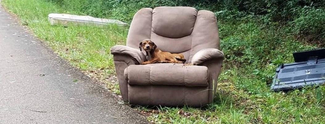 Abandonan a perrito en un sillón; esperó por días a sus dueños