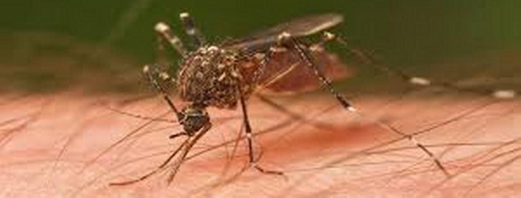 ¿Por qué sólo me pican a mi?: como eligen los mosquitos a su víctima