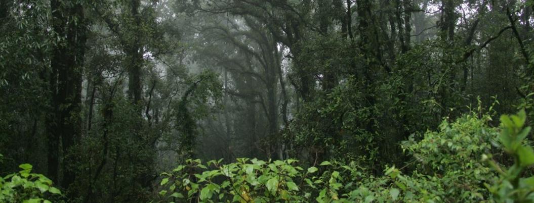 Recortes federales afectan protección de bosques en Morelos