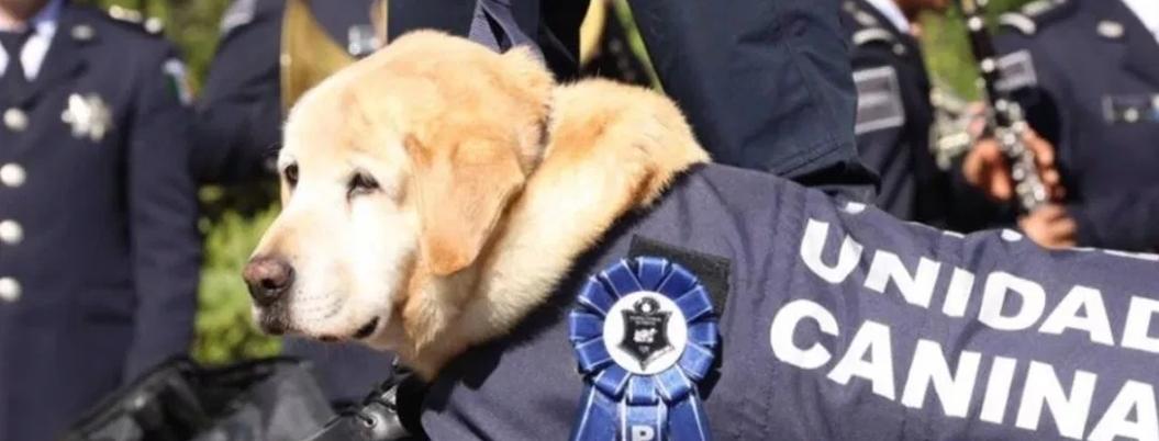 Perros policías se jubilan; serán adoptados por familias