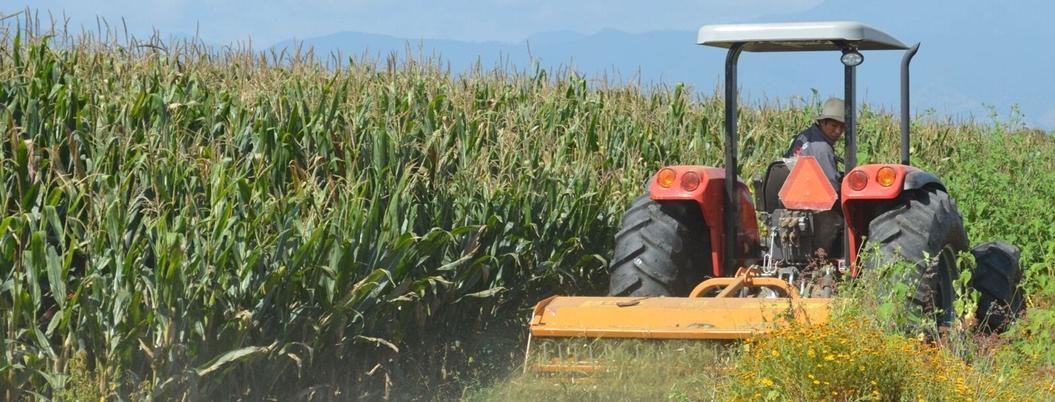 Sader espera incrementar un 8.6% producción de maíz