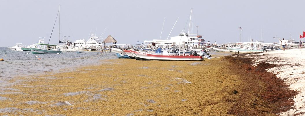 Sargazo afecta a 33 playas de Quintana Roo