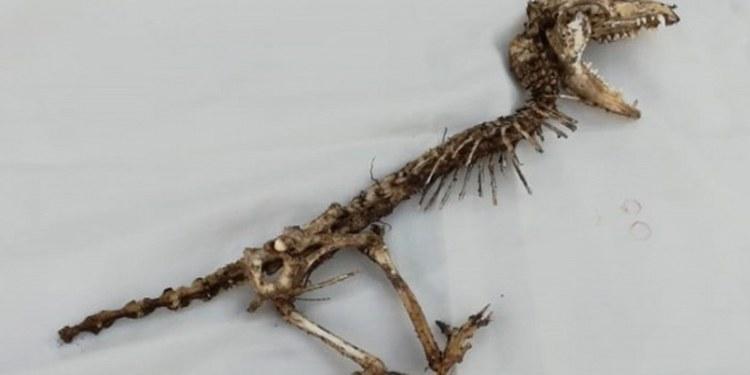 esqueleto de reptil