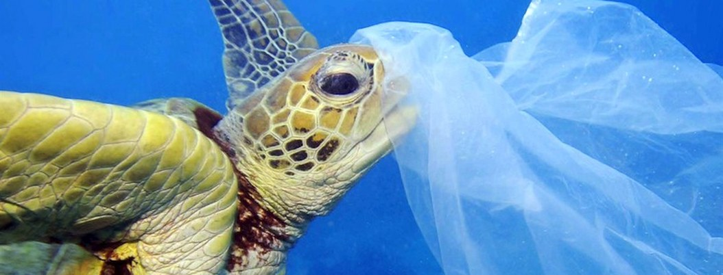 Más de la mitad de las tortugas en el mundo ingirieron plásticos: WWF