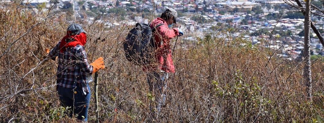 Segob halló 301 fosas clandestinas en Guerrero