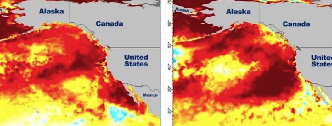 Masa enorme de agua caliente amenaza la vida marina en EU