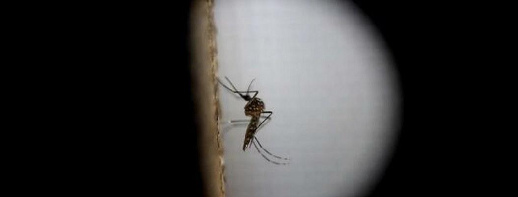 Paludismo, una amenaza latente y letal en México