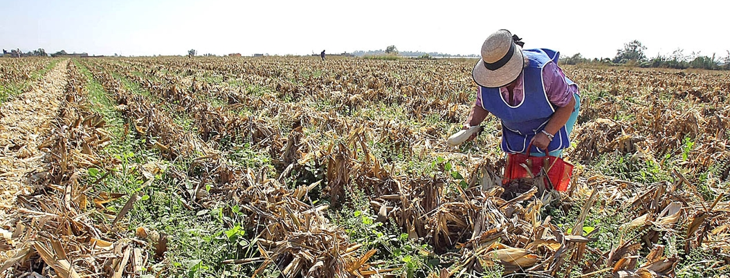 Sader impulsa plan para 'siembra de agua' en zonas áridas del país