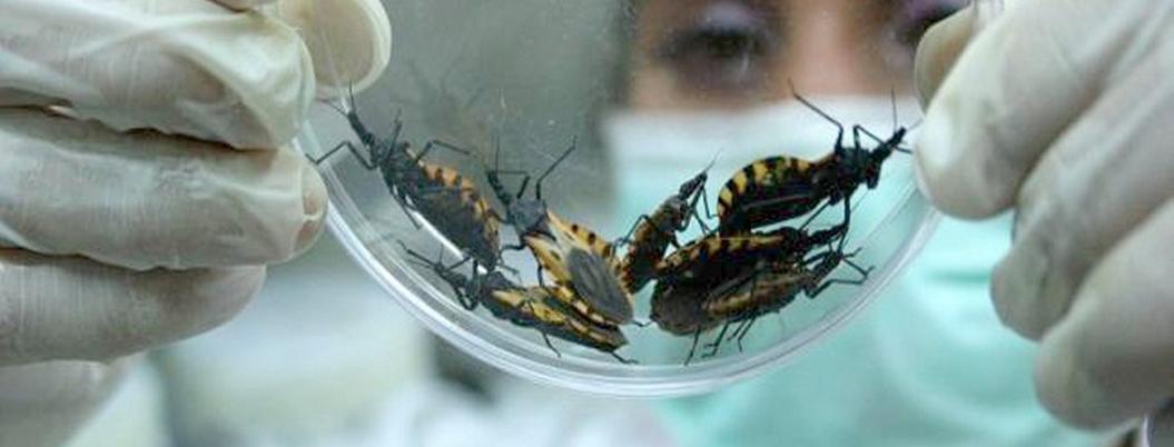 Mal de Chagas, una enfermedad que padecen un millón de mexicanos