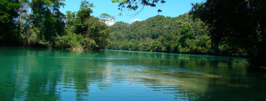 Piden a AMLO detener invasión en la reserva de biósfera en Chiapas
