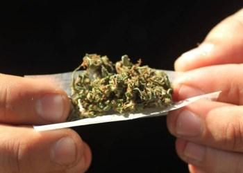 Consumo de mariguana aumenta 2.6% en menores de 17 años 1