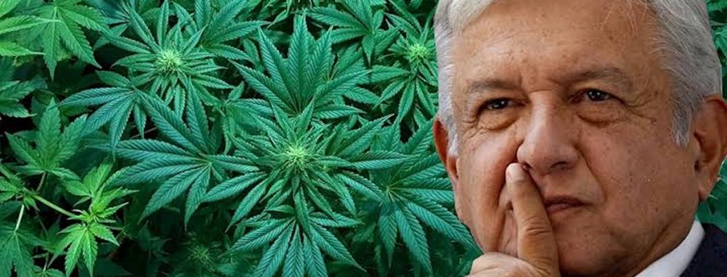Salud pública, el motivo por el que Obrador apoya marihuana legal