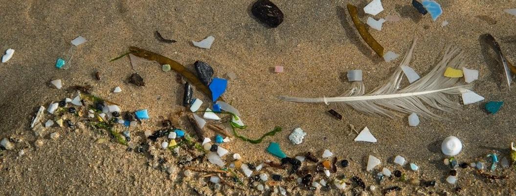 Microplásticos destruyen ecosistemas marinos de México