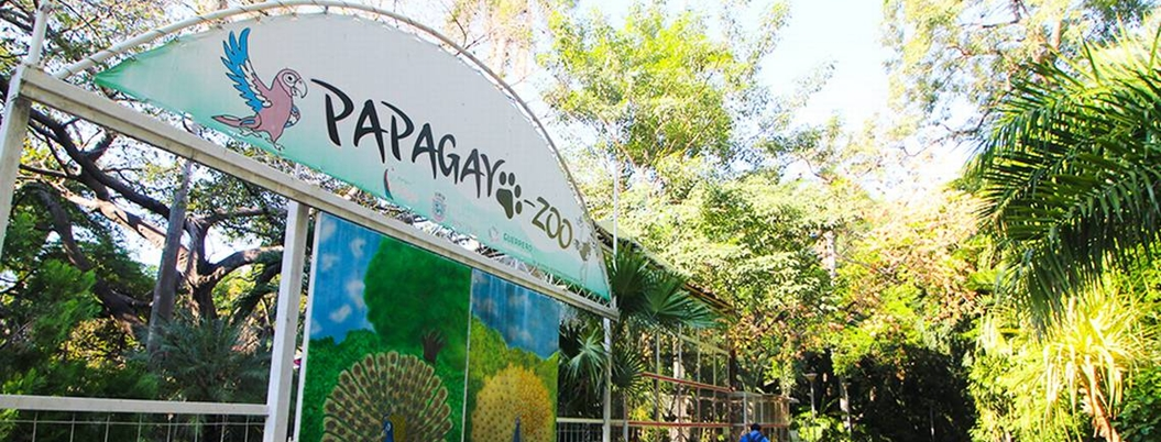 Negocios abrirán durante remodelación del Parque Papagayo