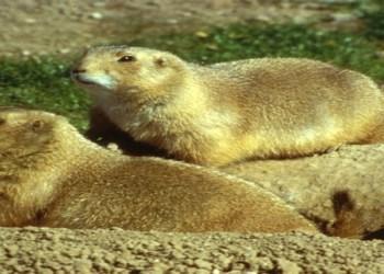 Senador denuncia ecocidio contra perritos de la pradera en NL 4