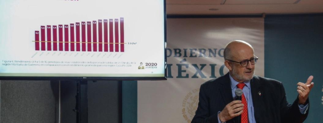 Guerrero produjo un millón 255 mil toneladas de maíz en 2019 2