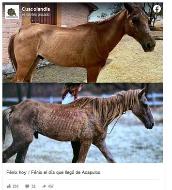 caballos.