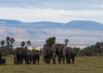 Nacen 140 crías de elefante en Parque Nacional en Kenia 1