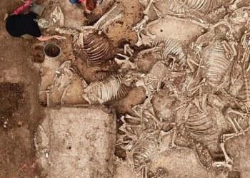 Arqueólogos descubren tumba de hace mil 500 años en Alemania | FOTOS 9