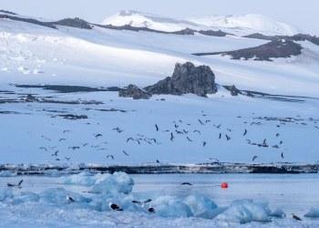 Investigadores encuentran vida a mil metros debajo de la Antártida 5