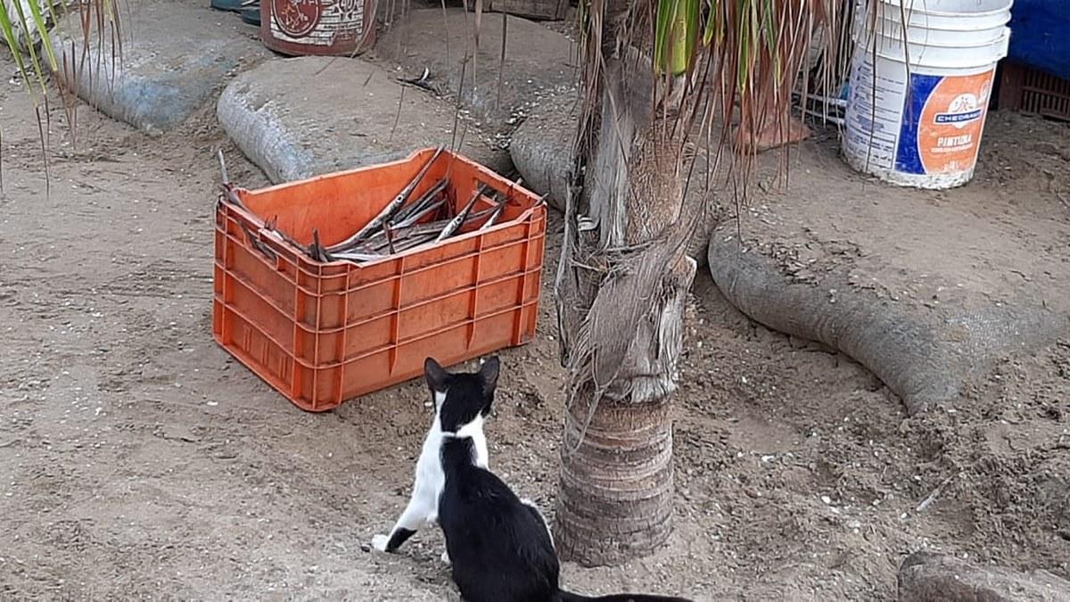 'Las congojas para mí no existen', ni por el covid, dice pescador de Acapulco 11