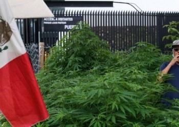 ¿Qué pasa con la mariguana en México?, el cannabis recreativo en un confuso limbo 4