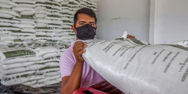 Reciben fertilizante más del 60% de productores de maíz de Morelos: Sader 1